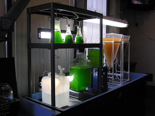 algae farming fuel
