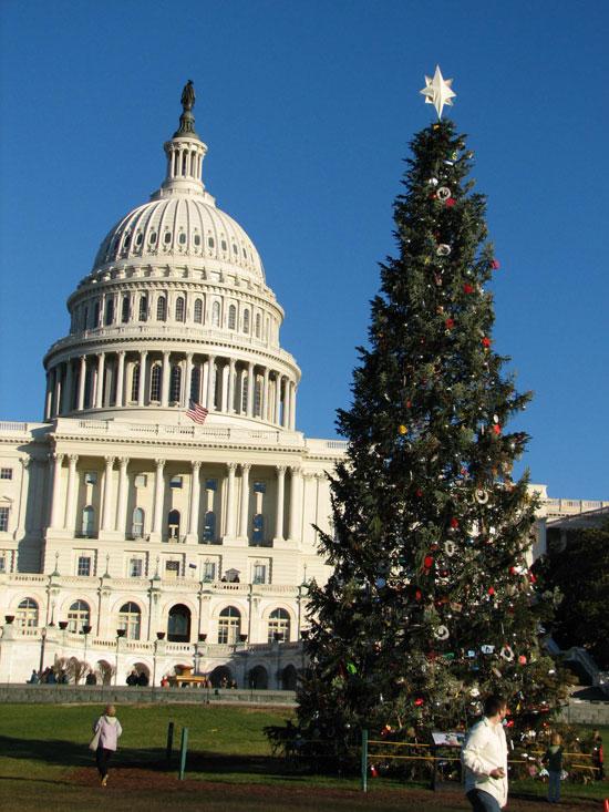Capitol & Tree