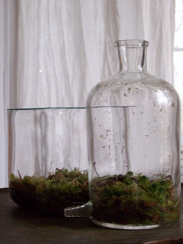moss in flasks