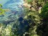 Abel Tasman National Park (Alasdair Milne) Tags: newzealand rtw abeltasman abeltasmannationalpark