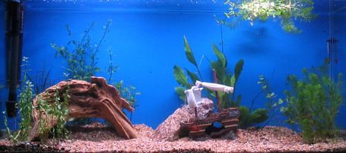 Traynor Aquarium