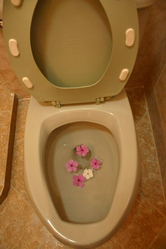 Flowers in the toilet!