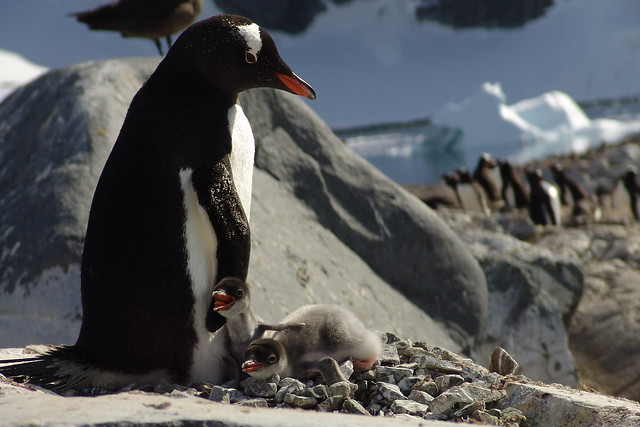 Antartica 2006 077