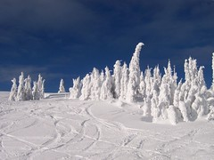 Snow Ghosts at Silver Star Mountain Resort (Marty Portier) Tags: snow canada geotagged interestingness explore feed vernon geotagcanada lpwinter