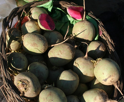 Roseheart radish: Beijingers call it shinremei