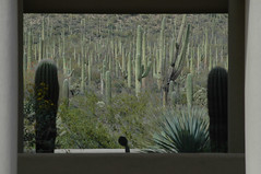 Framed (Socos) Tags: vacation cactus cacti photo framed btr bestest byg caaz05 dsc0086