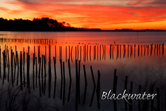 Blackwater (Nikographer [Jon]) Tags: morning winter sky cloud reflection nature topf25 water animal animals topv111 sunrise landscape iso100 landscapes lenstagged md topf50 nikon bravo december wildlife maryland 2006 easternshore dec national wetlands marsh d200 nikkor blackwater refuge nationalwildliferefuge nwr nikond200 nikographer outstandingshots 18703545gifed marylandseasternshore abigfave blackwaterrefuge blackwaternationalwildliferefuge 20061216d20038351 bnwr fav12007 nikographerjon imagesforblog1 tcf11