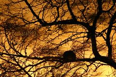 renda (corbata1982) Tags: sunset tree backlight contraluz lafotodelasemana y ninho puesta rs rvore pampa pds renda corbata1982 joodebarro lfssiluetas contraluznatural40