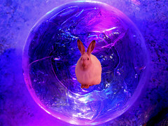 The Emissary (or Alice in the 25th Century) (Jocko B.) Tags: sphere bubble ice drink rabbit blue photoshopelements bunny animal composite aliceinwonderland art science fiction pink funny humor