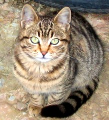 Neighbour's Cute Cat (*Saariy*) Tags: cute animals cat canon turkey relax trkiye turquie turchia turkei instantfave abigfave kittysuperstar bestofcats ultimateshot pet500 explorewinnersoftheworld catnipaddicts saariysqualitypictures newgoldenseal