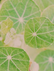 () Tags: color green nature colors soft