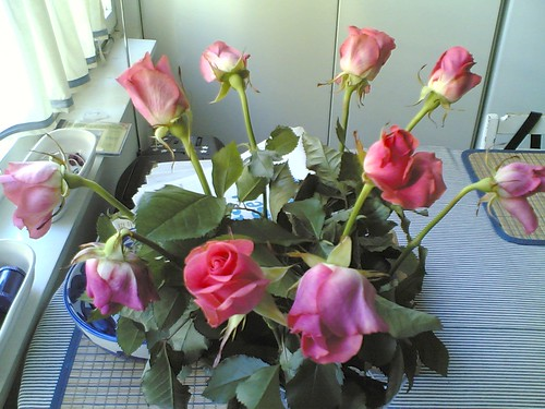 Roses by Anna Amnell
