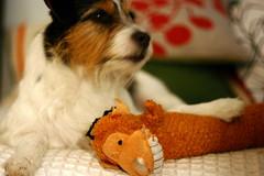 Oskar och apan