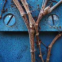 (room929) Tags: blue toronto abstract texture screws vines peeling paint dof lizard railing chipping colorphotoaward
