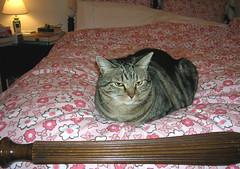 Trin Loaf