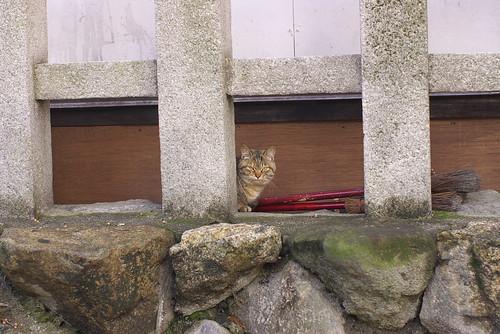 Today's Cat@20070213