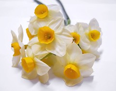 lovely... (B@ni) Tags: white flower yellow beyaz narcissus iek sar nergis ultimateshot