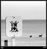 Perros No... (z-nub) Tags: blackandwhite bw blancoynegro dogs animal animals digital canon zoe noiretblanc playa bn perros animales bichos guardamar seresvivos perrosno znub zoelv ltytr1 formatocuadrado favsegúnznub bnysimilares cuadraditas cuadradita zbbn zoelópez cuadradosverticales sinacento otrotipodevida