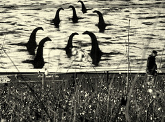 It's Behind You (Paul Adshead) Tags: its monster paul you behind loch ness adshead