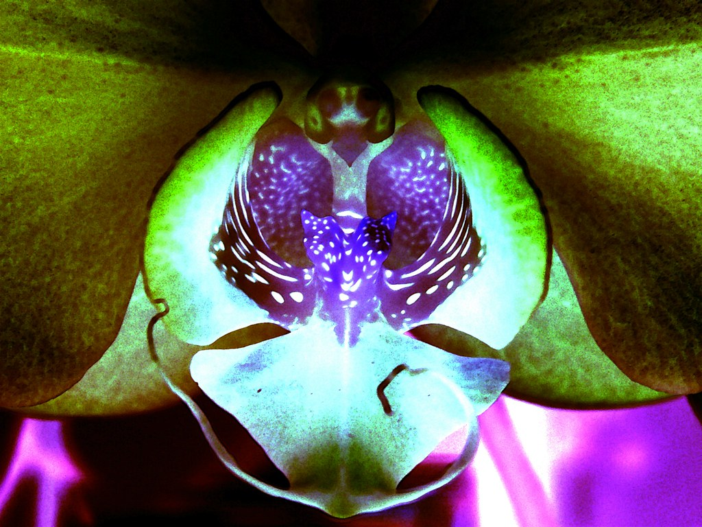 Orchid in Negative