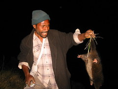 Cuscus catch