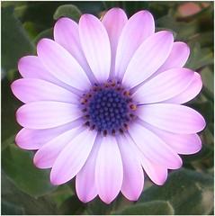(Lara's  Stuff) Tags: flower fleurtography