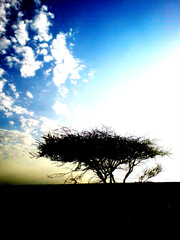 (M.A.J.I.D) Tags: sky tree qatar