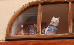 Hello! (sarakot films) Tags: cats window cat prague praha catsandwindows