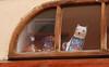 Hello! (sarakot films) Tags: cats window cat prague praha catsandwindows
