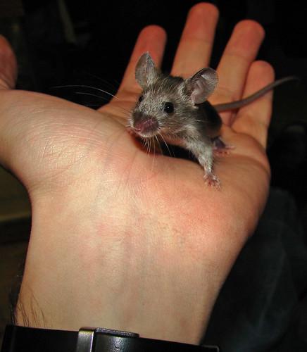 Mice Make Good Pets Too!