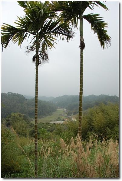 2007北埔過年遊記~初一爬山走春-08