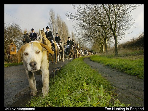 Fox Hunting in England 2006-2.jpg