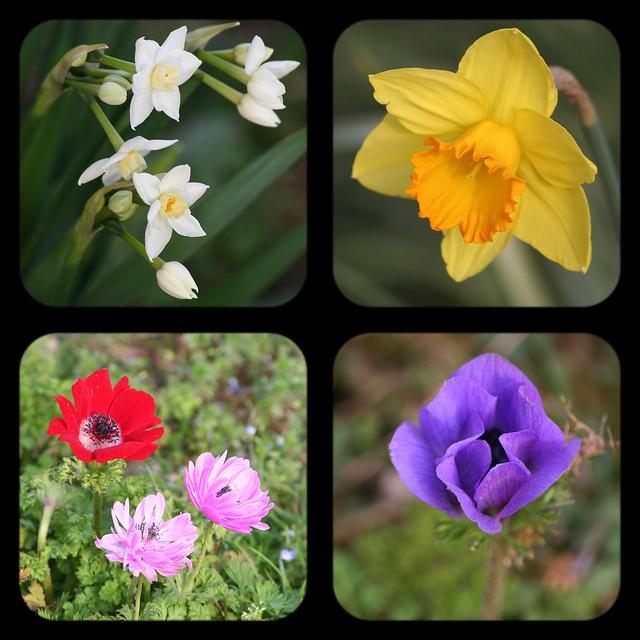 Fleurs de printemps (déja)