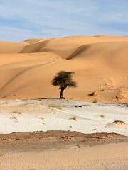 Des(s)ert (Melville B.) Tags: africa tree sahara is sand desert sable powershot getty s3 gettyimages mauritania mauritanie outstandingshots adrar powershots3is s3is 25faves diamondclassphotographer ergouarane melvilleb