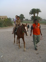 Horse ride in Luxor