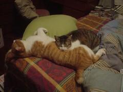 [柳丁] 你是我的抱枕 (2)