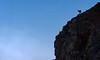 The clouds guardian (Stephen Hunt61) Tags: camoscio mammifero rupicapra animale libero parco nuvole rupe rocce animals mammals mountains clouds rocks wild wilderness stefanocaccia outdoor silhouette