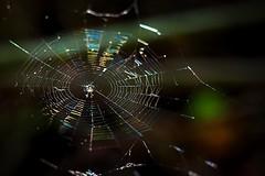 Spider Web (AdrianoSetimo) Tags: spiderweb bokeh colorful depthoffield dof cores simetria symmetry hss olympusomdem10 olympusmzuikodigitaled1240mmf28pro olympus1240mm