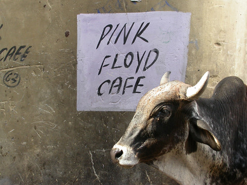 pink floyd cafe