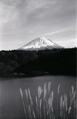 japanese pampas grass and Mt. Fuji (Screw Mount Leica IIIf + COLOR-SKOPER 28mm) (potopoto53age) Tags: leica bw plants mountain lake plant film monochrome grass japan outdoors kodak voigtlander 28mm ernst japanesepampasgrass mtfuji wetzlar f35 trix400 leitz iiif ernstleitz shojilake screwmountleicaiiif colorskoper voigtlandercolorskoper28mmf35
