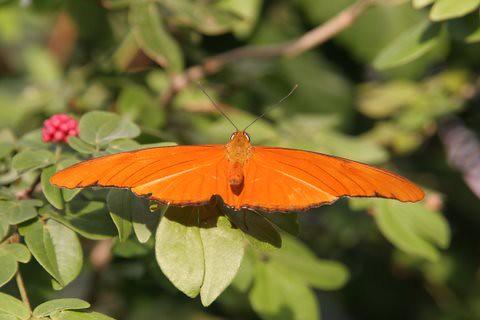 Butterfly, IMG_0887.JPG