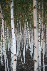 Tate Modern Trees (Commonorgarden) Tags: trees stilllife london art nature tate tatemodern magichour