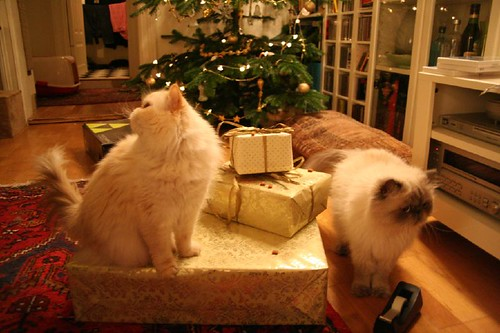 christmas cats gift and nice present