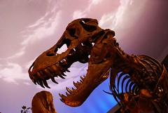 childrens museum t-rex
