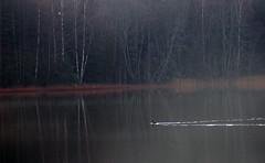 Nordbytjernet - Desember (Krogen) Tags: nature norway landscape norge natur norwegen olympus c7070 noruega scandinavia akershus romerike krogen landskap noorwegen noreg ullensaker skandinavia nordbytjernet