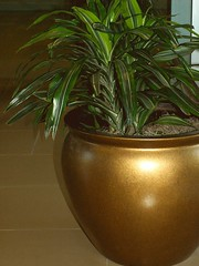 Golden Pot, Hospital Corridor - by cobalt123