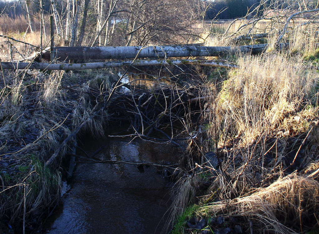 Beaver Creek!