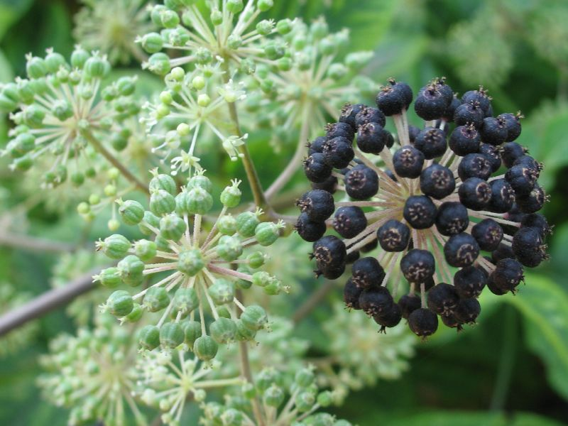 Green and Black Seeds