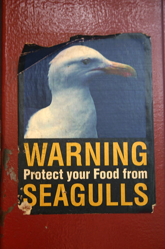 Seagull Hooligans