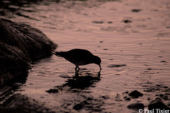 silhouette (Paul Tixier) Tags: helluva cloverpoint bestnaturetnc06